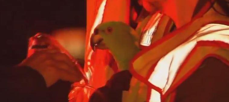 """Papagaios são resgatados de incêndio depois de gritarem """"socorro, fogo!"""""""