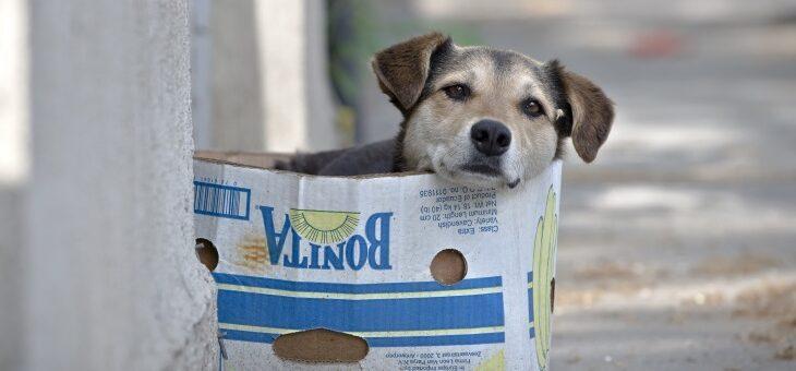 Saiba como denunciar maus-tratos ou crueldade contra os animais