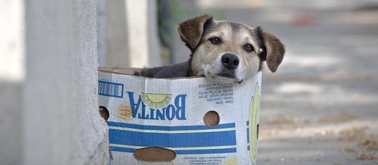 Peças de artistas serão leiloadas em Natal para beneficiar animais abandonados