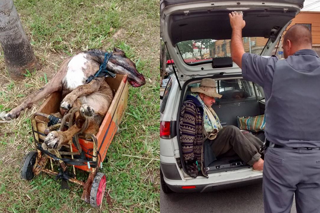 Idoso recolhia cães de rua, abusava sexualmente deles, os surrava e matava a machadadas