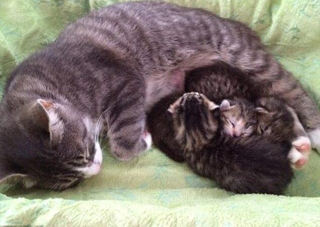 Após perder ninhada, gata adota filhotes órfãos