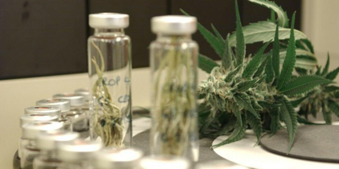 Mercado vê otimismo no setor de cannabis medicinal