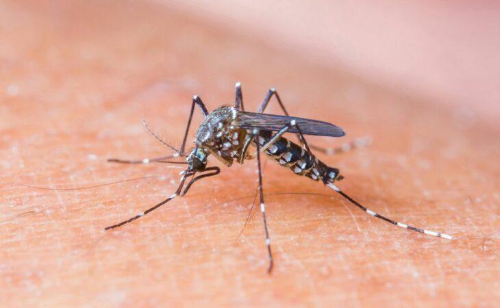Dezoito casos de zika vírus são confirmados no RN