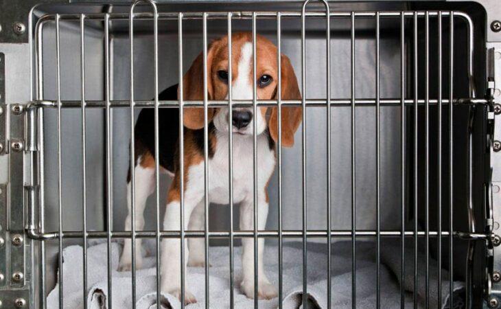 Projeto que proíbe o uso de animais em pesquisas será debatido em audiência pública