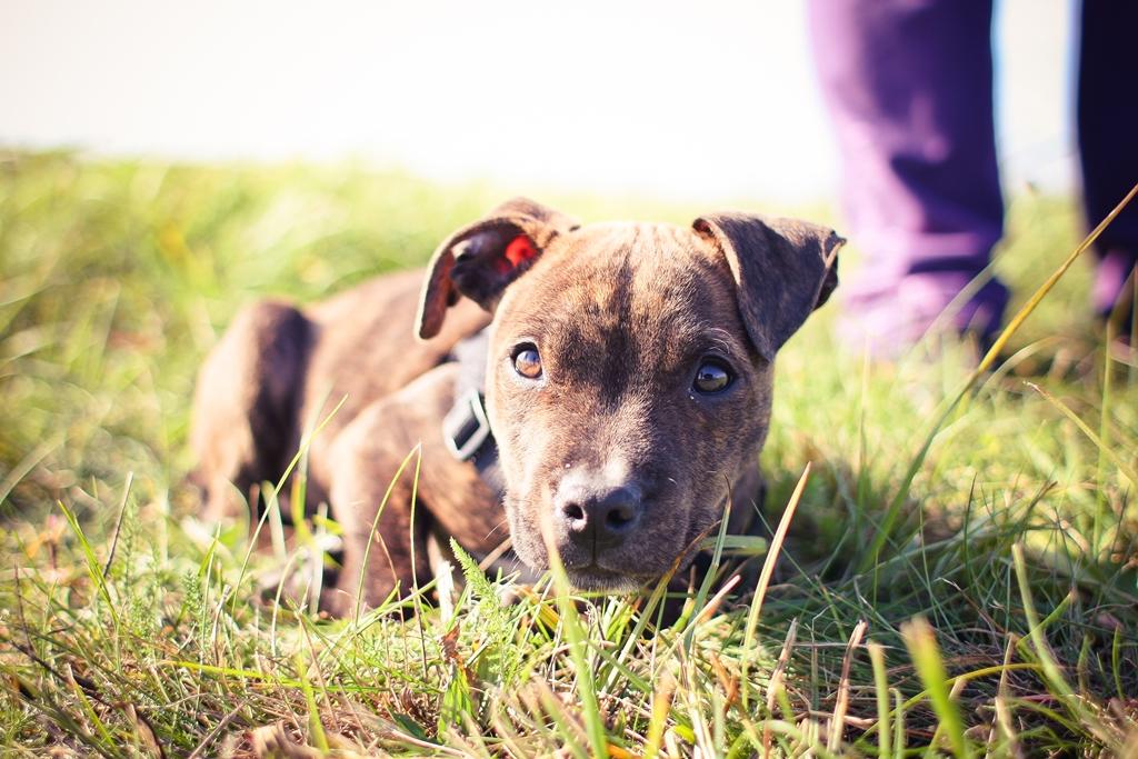 O 'olhar' é a causa do amor entre cães e humanos