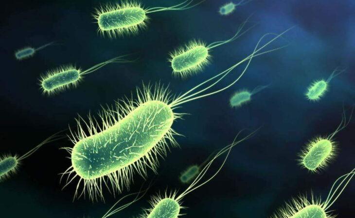 DF registra 35 casos de superbactéria ao longo deste ano