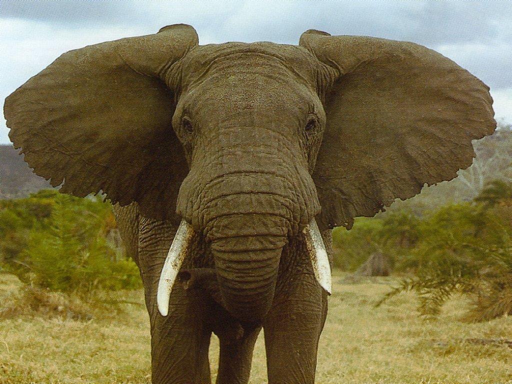 Elefante foge de circo e mata homem de 65 anos