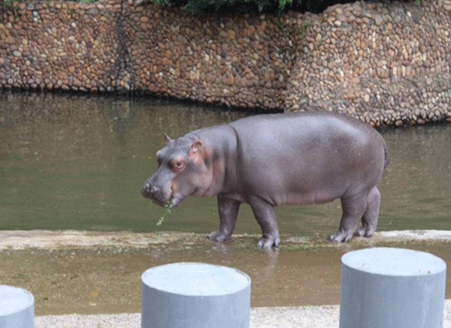 Hipopótamo é a mais nova atração do Aquário Natal