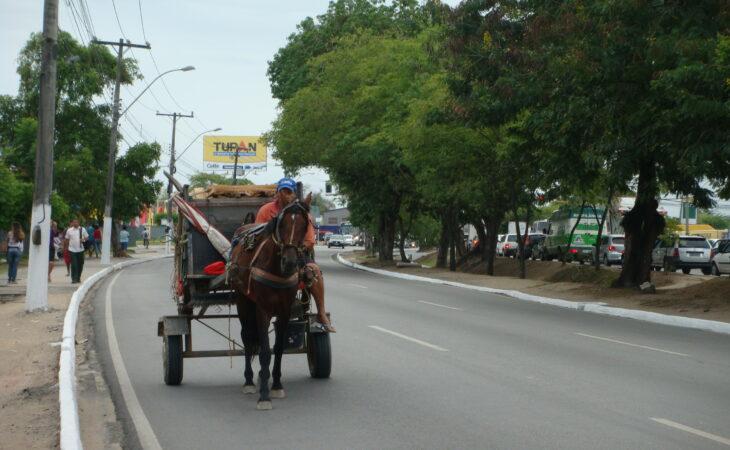 Prefeitura apresenta proposta para proibição de veículos de tração animal