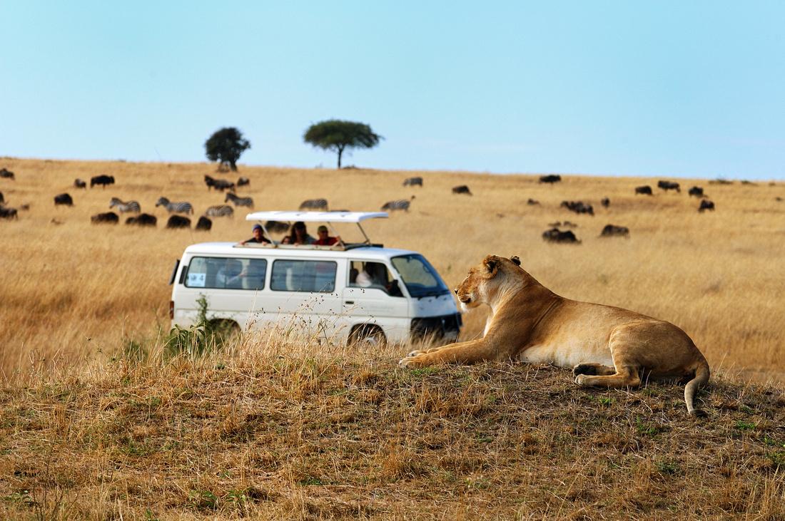 Leoa pula dentro de carro e mata turista durante safári na África do Sul