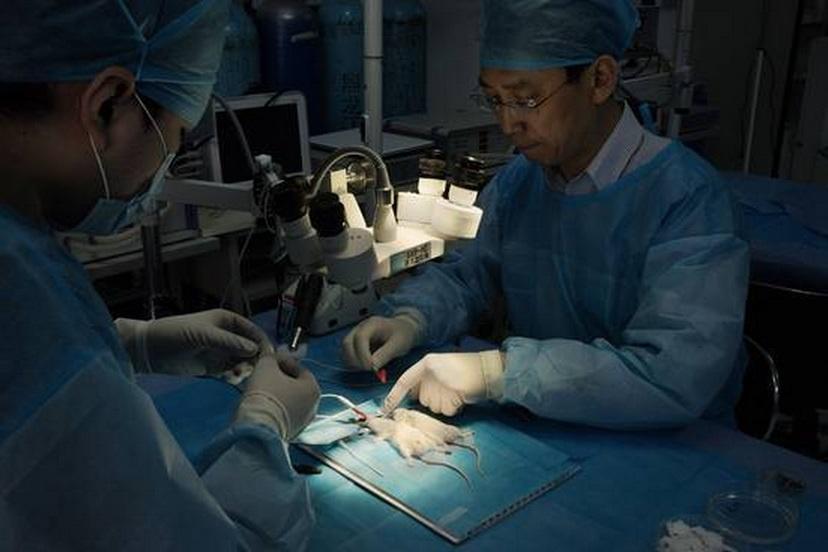 Médico chinês irá realizar transplante de cabeça em macacos