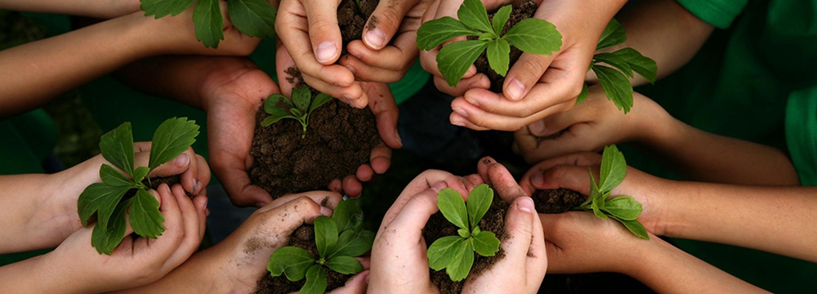 Educação ambiental pode virar disciplina obrigatória nas escolas