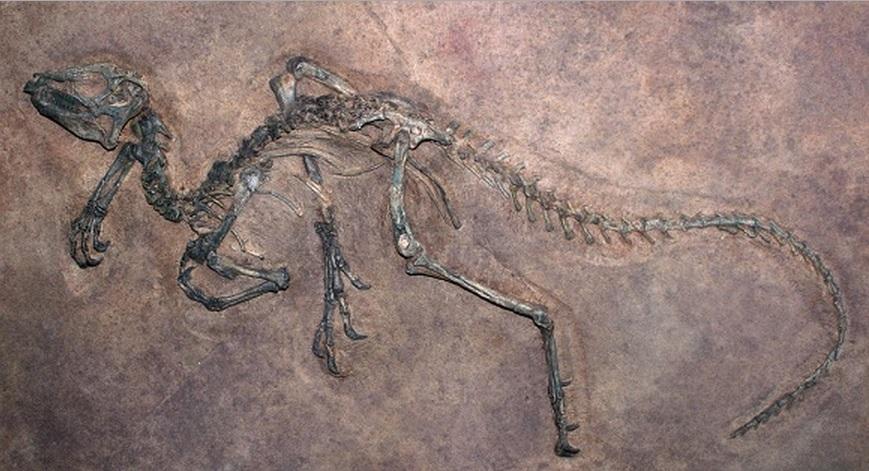 Pesquisadores encontram fósseis com sangue de dinossauro