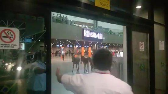 Concorrente ao hub da TAM, aeroporto de Fortaleza tem 'jumentos' passeando no saguão
