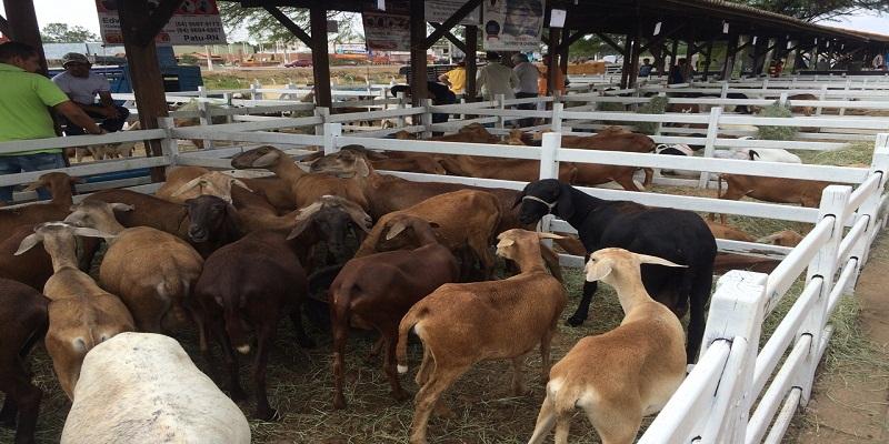 Sape realiza 6ª Festa da Cabra em São José de Mipibu neste fim de semana