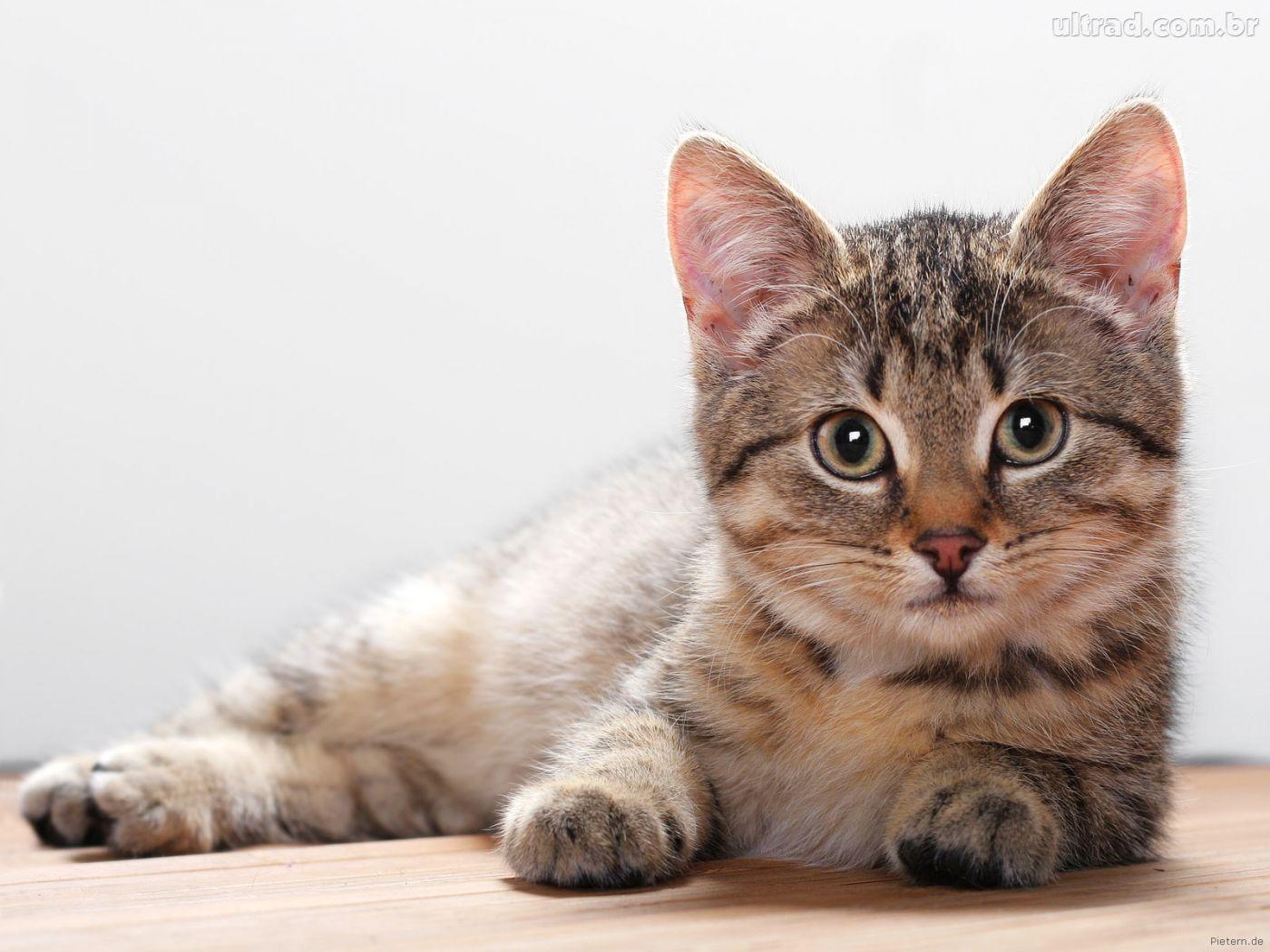Conheça a história do gato que previu 50 mortes