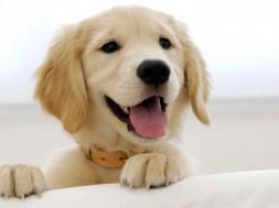 Cachorro-racoes