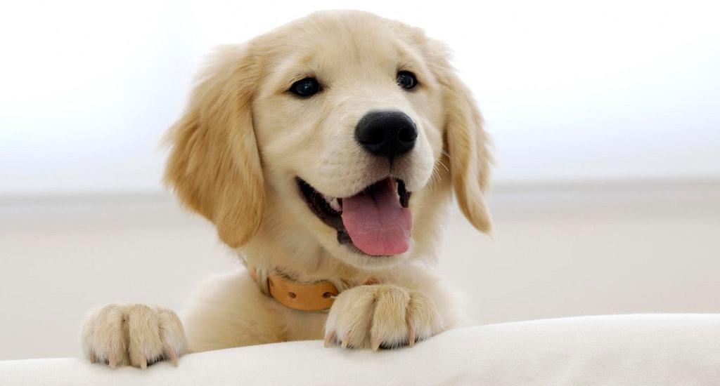 Como é calculada a idade de um cachorro?