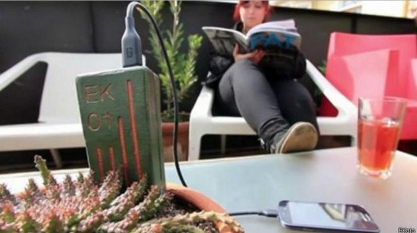 Engenheiras desenvolvem dispositivo que usa planta para carregar celular