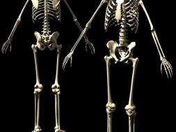 esqueleto-humano-ossos