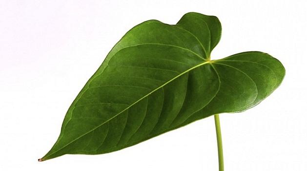 Será que apenas uma folha é capaz de produzir energia?