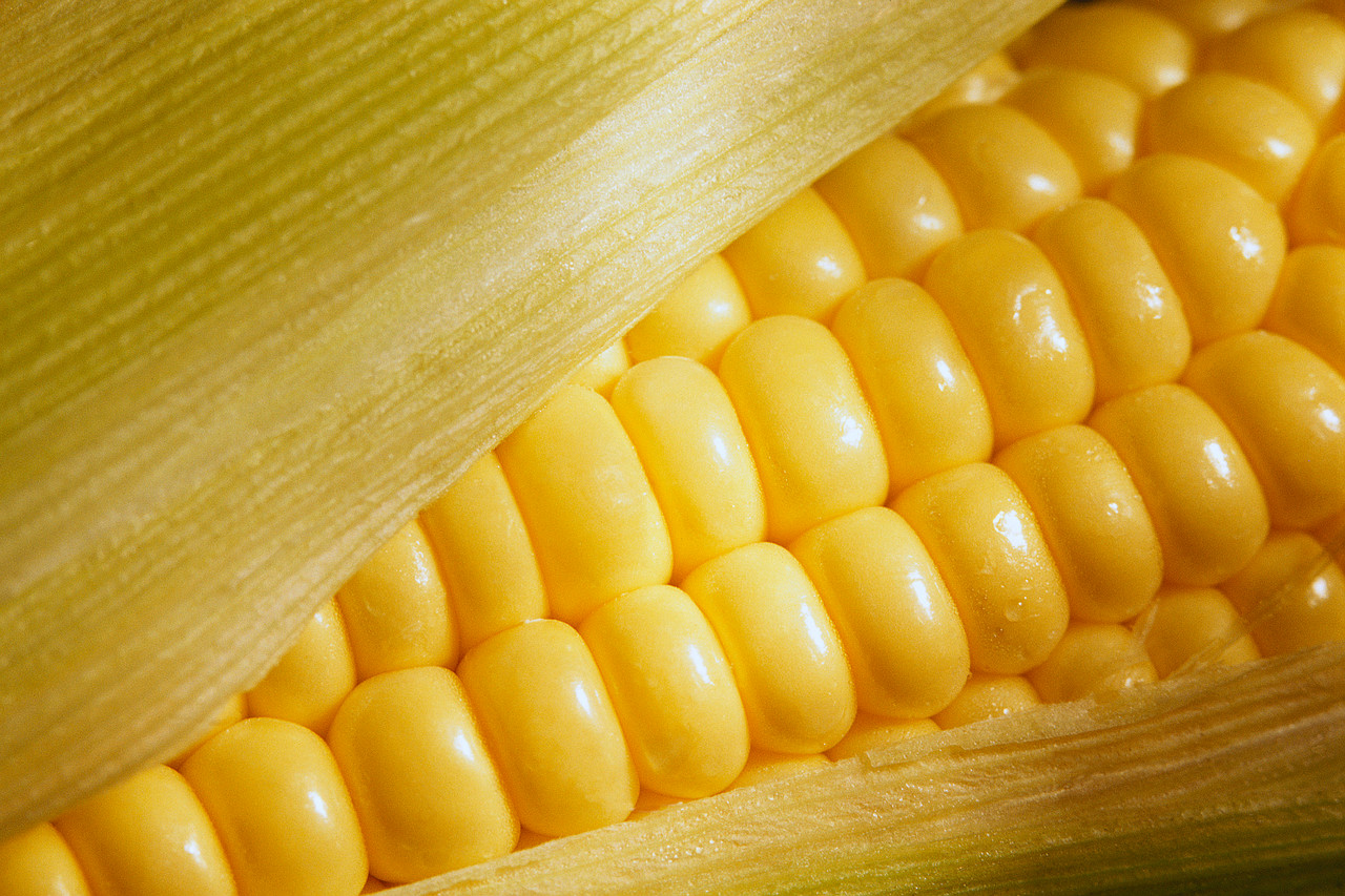 Cientistas criam milho capaz de crescer em terrenos mais áridos e desafiar a falta d'água