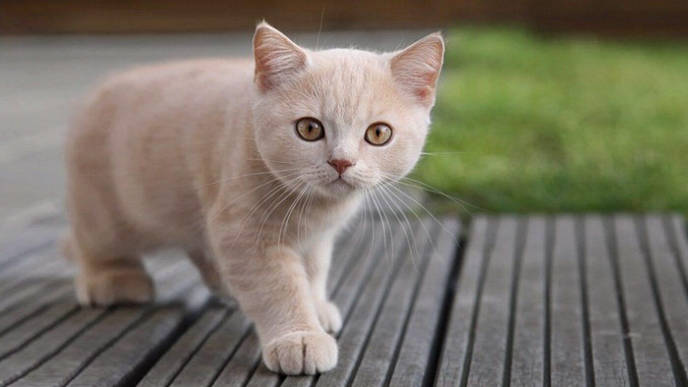 un-gato-bebe-433