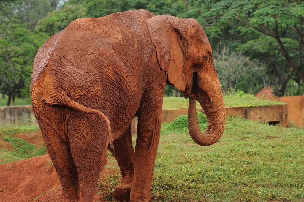 Zimbábue contabiliza mais 22 elefantes envenenados em parque nacional