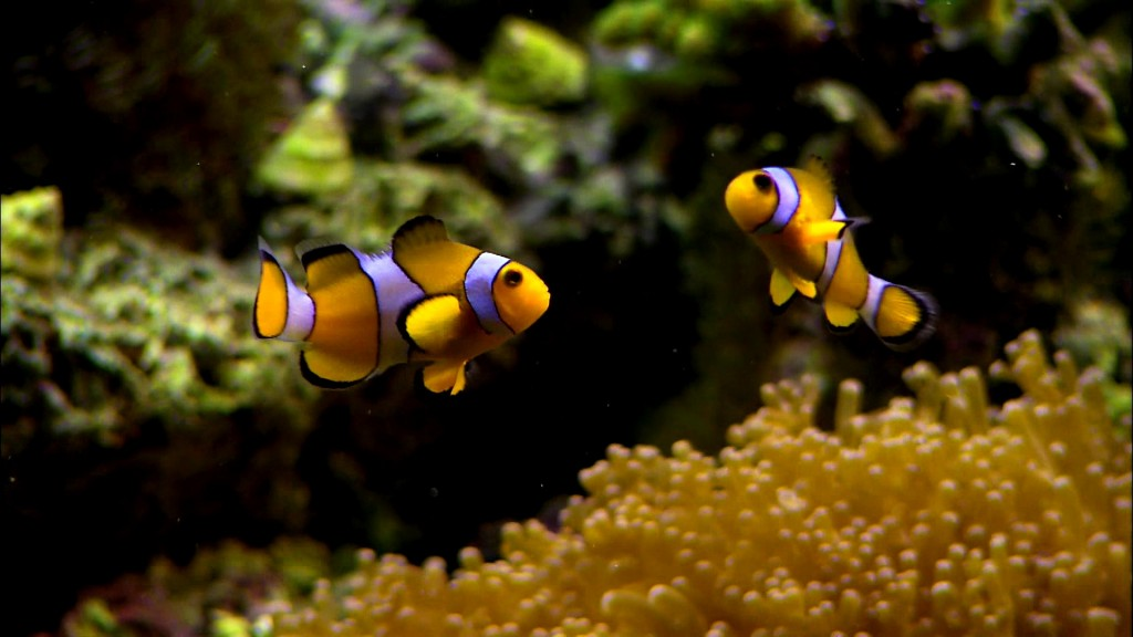 Feira de Aquarismo Ornamental acontece de 19 a 24 de outubro no Via Direta