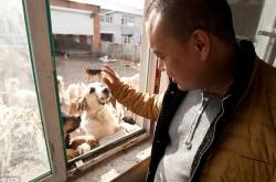 milionário chinês e cachorros