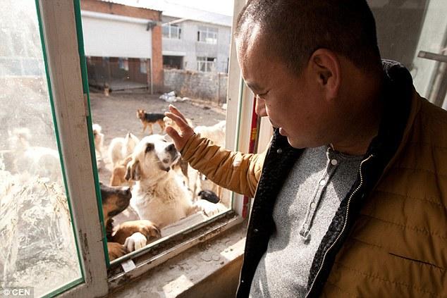 Milionário gasta sua fortuna para salvar cães do mercado de carne na China