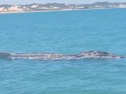 baleia em natal