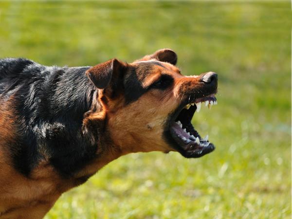 Sesap alerta para o aumento do número de casos de raiva em cães
