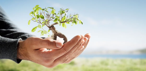 Comissão aprova política de recompensa por preservação ambiental