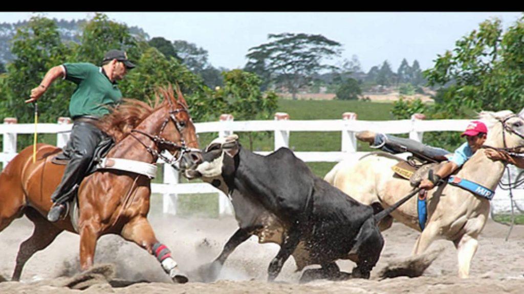 CPI debate maus-tratos a animais em rodeios e vaquejadas nesta terça (10)
