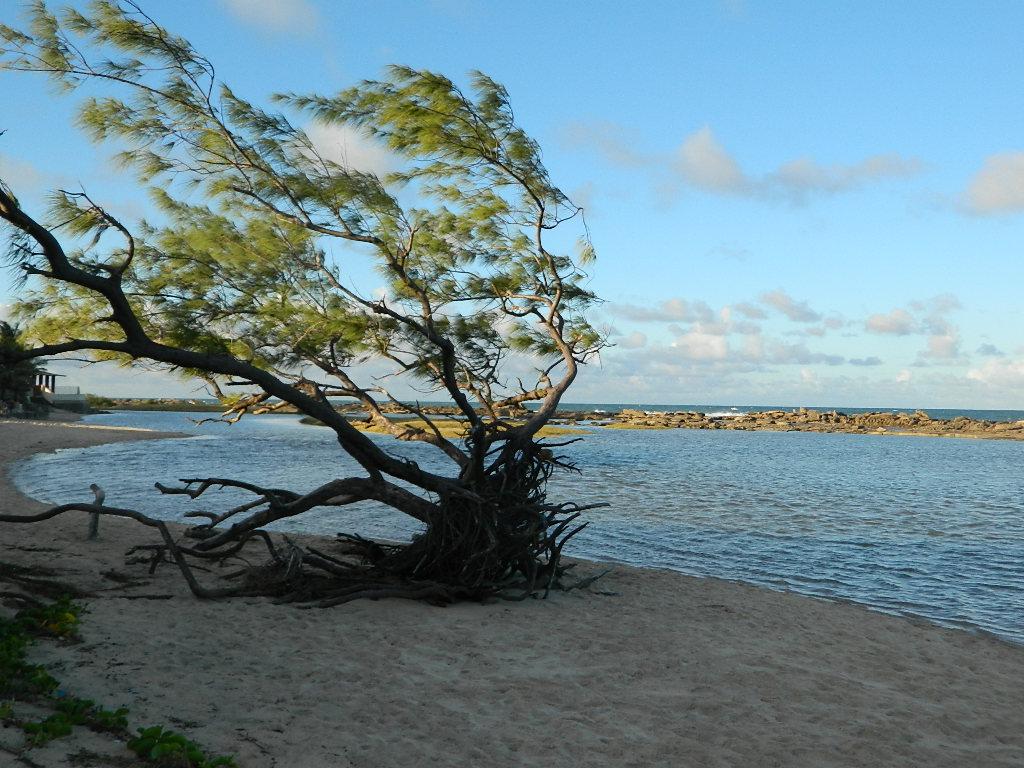 Conheça Camurupim, uma praia cheia de arrecifes e tranquilidade