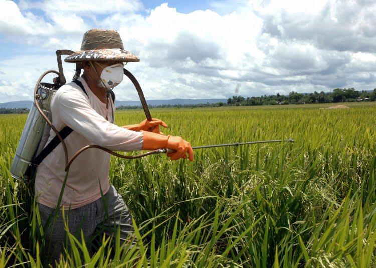Exposição a agrotóxicos pode causar câncer e mal de Parkinson, alerta Inca