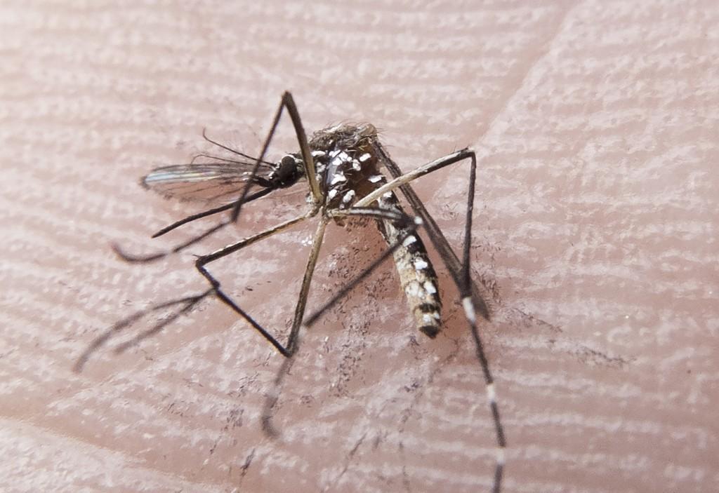 Natal já registrou mais de 6 mil casos de dengue, zika e chikungunya em 2018