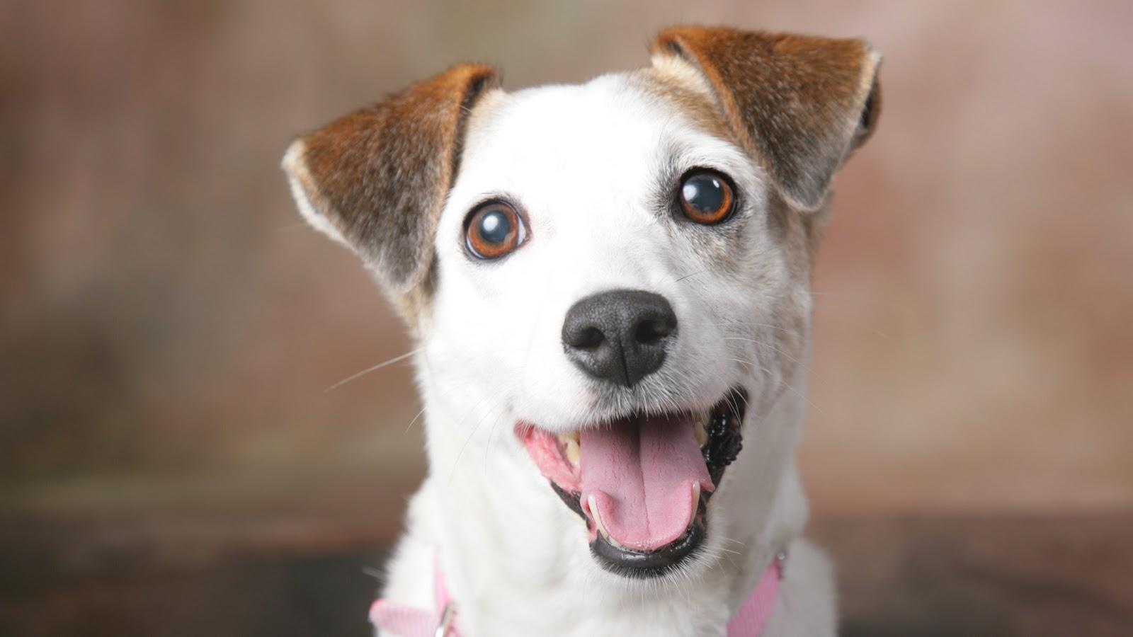 8 motivos para adotar um cãozinho vira-lata