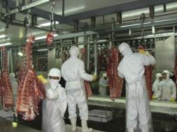 frigorifico_carne bovina