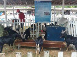 19ª Exposição Agropecuária do Potengi