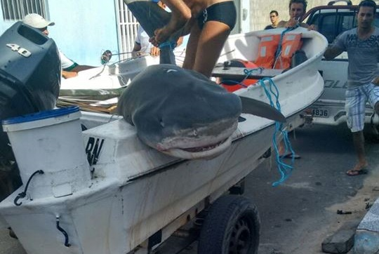 Equipe de pesca mata tubarão de quase 4 metros em praia de Macau/RN