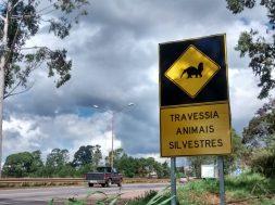 animais silvestres na estrada