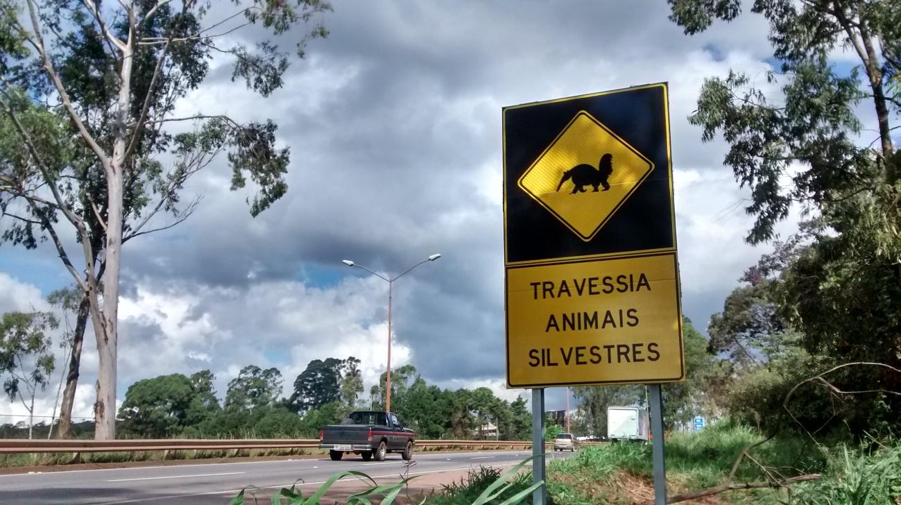 Projeto quer garantir circulação de animais nas estradas e evitar atropelamentos