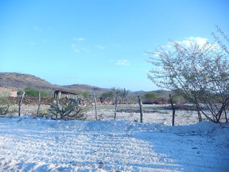 Governo do RN ganha prêmio internacional com projeto de desertificação