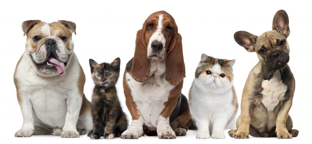 Veja dicas para cuidar da saúde do seu pet