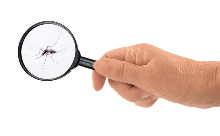Em 2019, mais de 13 mil casos suspeitos de chikungunya foram notificados no RN
