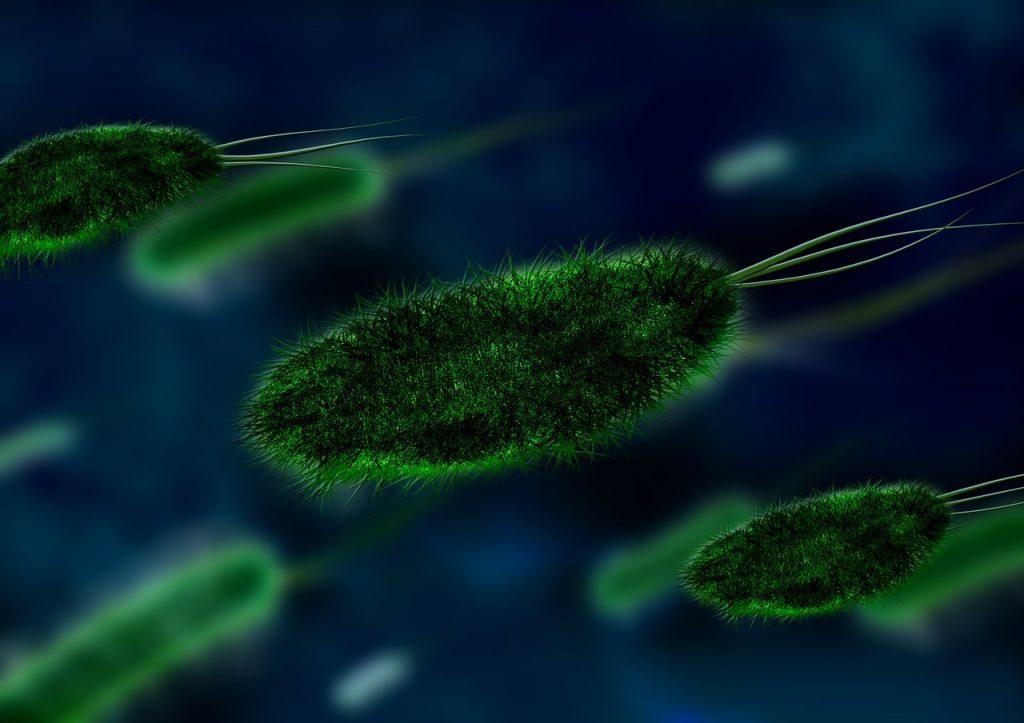 Movimento das bactérias pode gerar energia, dizem cientistas