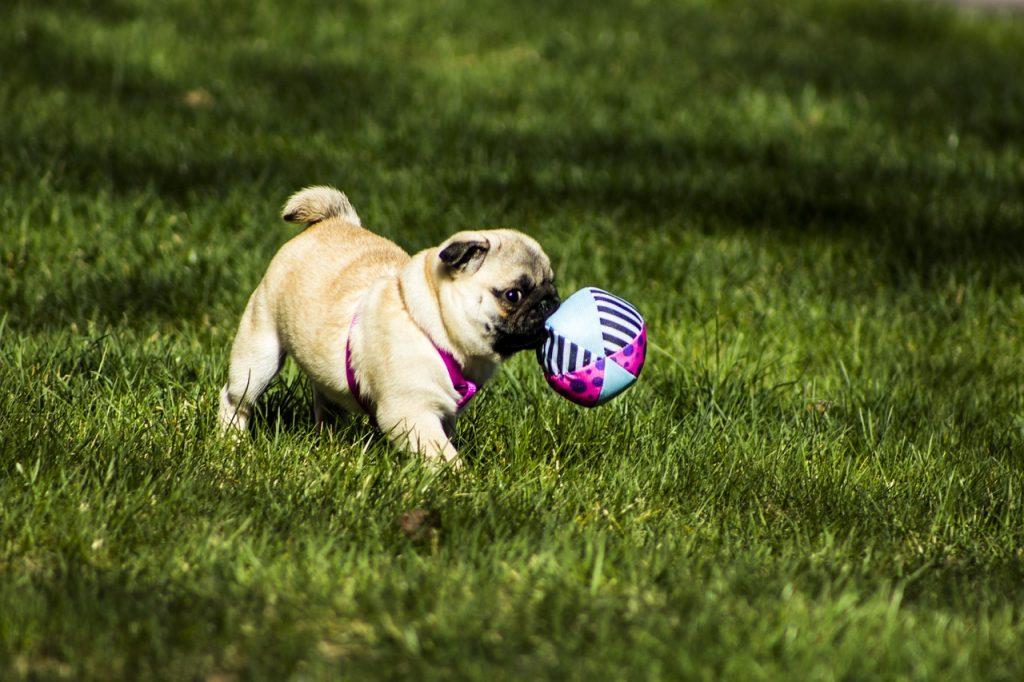 Atividades físicas com pets: Veja dicas para iniciantes