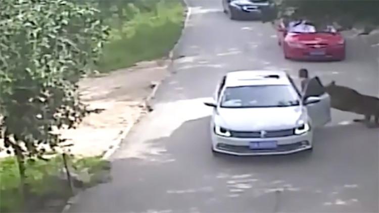 Tigre mata mulher em zoológico na China